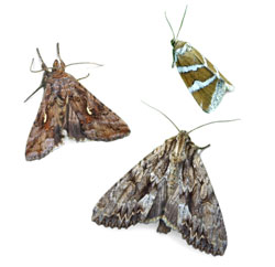 Moths Moth Control