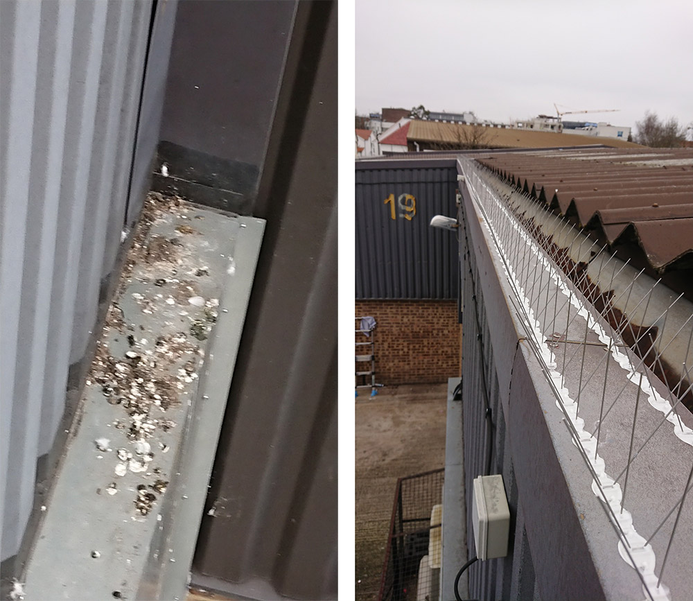 Wembley Bird Proofing